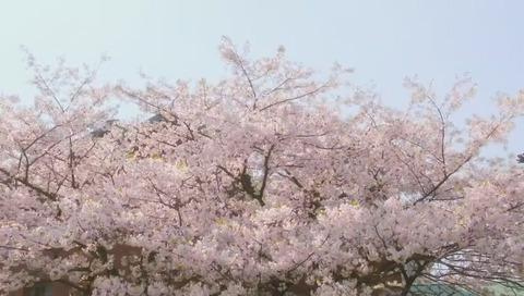 『櫻子さんの足下には死体が埋まっている』第1話 画像