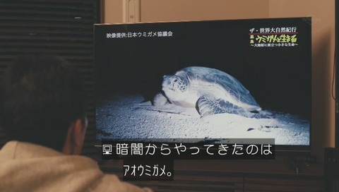 ザ・世界大自然紀行 日本ウミガメ協議会
