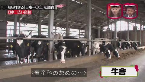 「日本一広い高校」北海道 標茶高校 牛舎