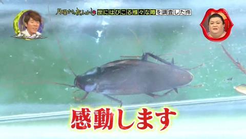 北海道 ゴキブリ 平気 感動 (84)