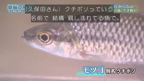 鉄腕DASH すっぽんと刀 (508)