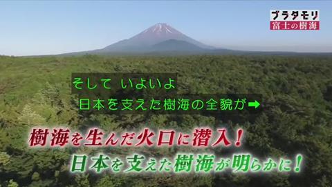 ブラタモリ 富士の樹海(青木ヶ原樹海 )(2623)
