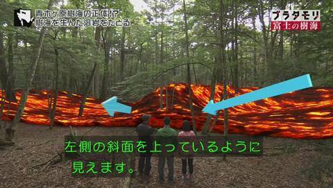 ブラタモリ 富士の樹海(青木ヶ原樹海 )(1409)