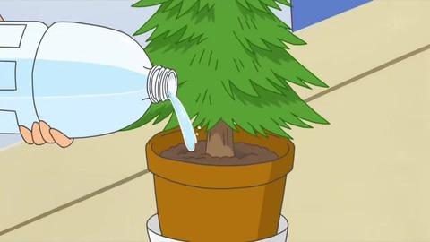 サザエさん「プレゼントの育て方」造木に水やりするカツオ