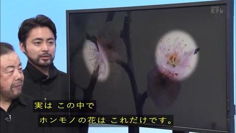 「植物に学ぶ生存戦略2」ウメの花 本物と偽物