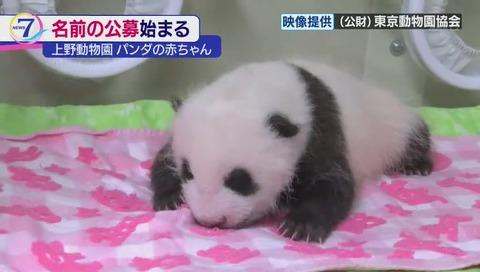 上野動物園 ジャイアントパンダの赤ちゃん