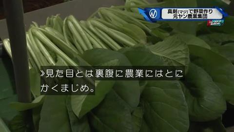 新・情報7days 元ヤンキー 農家 (34)
