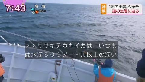シャチが水深500mのイカを食べた