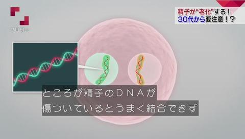 精子DNA