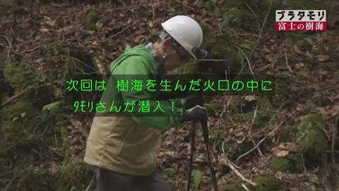 ブラタモリ 富士の樹海(青木ヶ原樹海 )(2617)