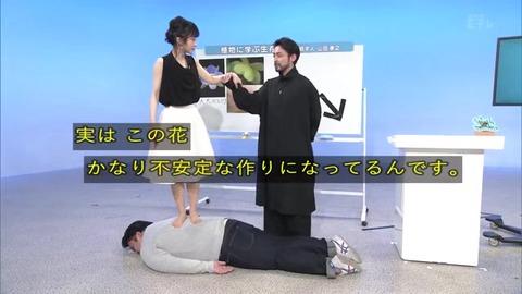 「植物に学ぶ生存戦略2」オオイヌノフグリ