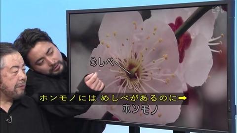 「植物に学ぶ生存戦略2」ウメの花 偽物にはおしべがない