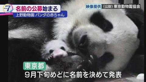 上野動物園 ジャイアントパンダの赤ちゃん 9月発表