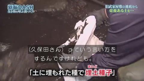 鉄腕DASH すっぽんと刀 (894)