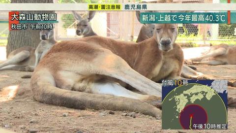 大森山動物園 夏バテ カンガルー