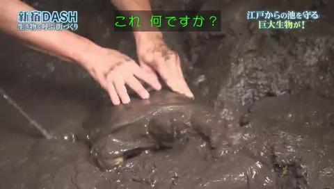 鉄腕DASH すっぽんと刀 (761)