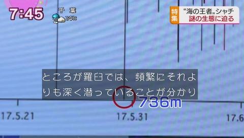シャチは水深264メートルが報告の記録だったが736メートルだった