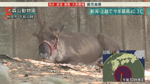 大森山動物園 夏バテ鹿