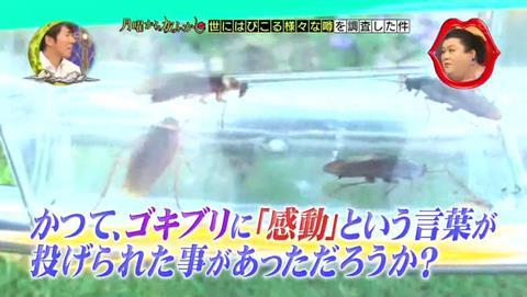 北海道 ゴキブリ 平気 感動 (90)