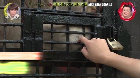 宇都宮動物園 ライオンにさわれる