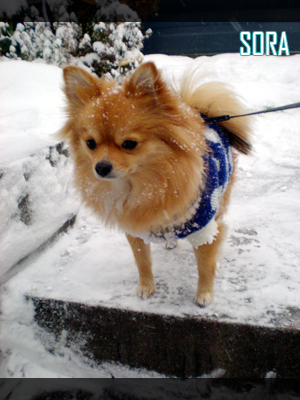 雪かきを見物