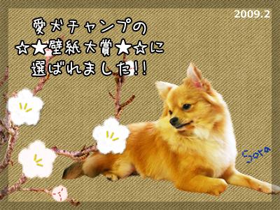 愛犬チャンプ☆★壁紙大賞★☆