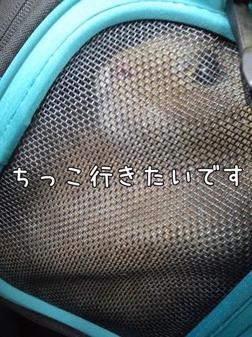 HI3H0187 (1)