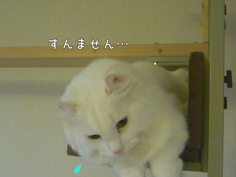 P1120386