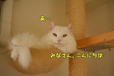 DSC_1564