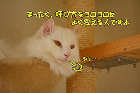 DSC_1567