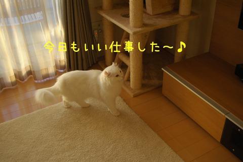 DSC_6189