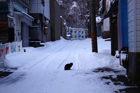 IMG_2167梅猫