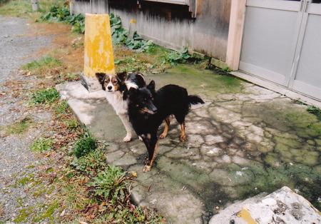 2003-10-13下白滝駅と犬