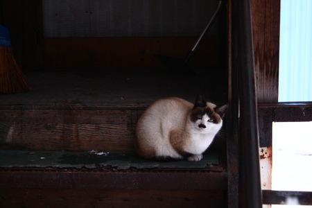 IMG_2426梅猫