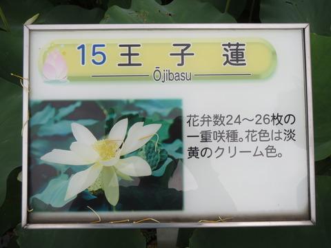 IMG_0183