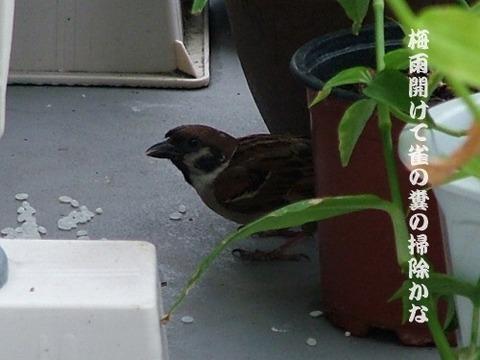 梅雨開けて雀の糞の掃除かな
