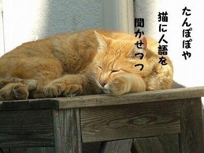 たんぽぽや猫に人語を聞かせつつ