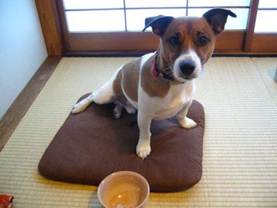 二代目お茶犬