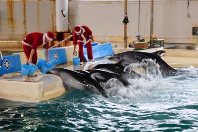 20121223_4463水族館SM