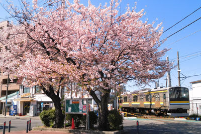 20190409DSCN0730鶴見線桜SM