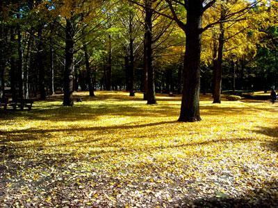 20101123DSCN1879野川公園SM
