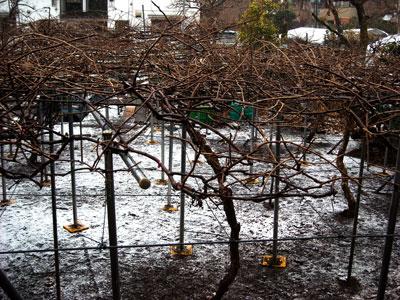 20110211雪DSCN2198SM