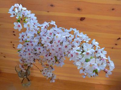 20150402DSCN1982桜の枝SM