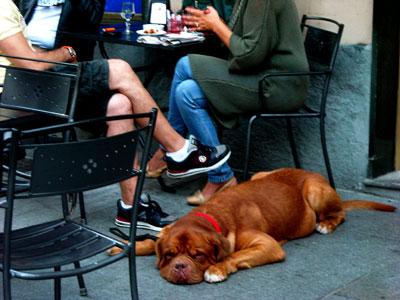 20100920DSCN1636犬SM