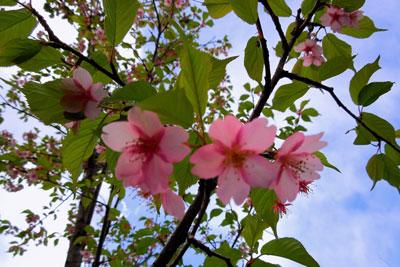 220120325_0963代官山桜SM