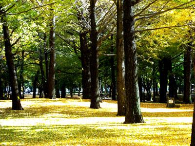 201123DSCN1882野川公園SM
