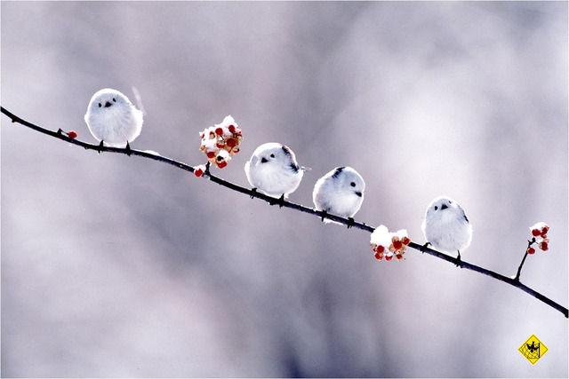 丸い白い鳥4羽
