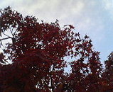 伊藤家の木
