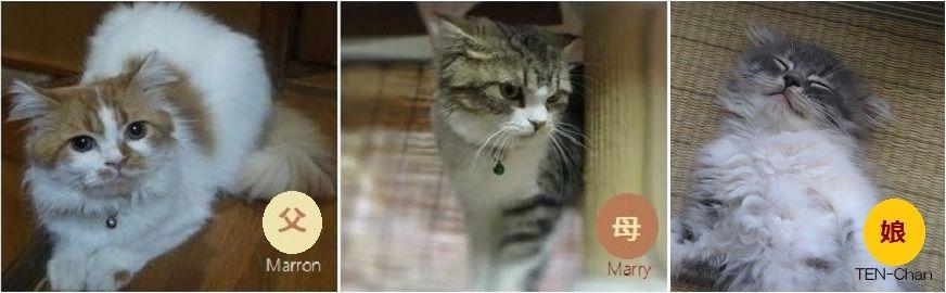 『テンちゃんの両親M&M