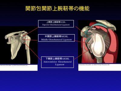 肩の解剖1